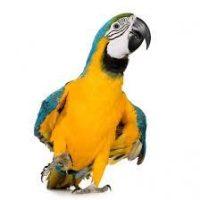 Лакомства за големи папагали