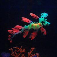 Светящ дракон 13 см декорация за аквариум